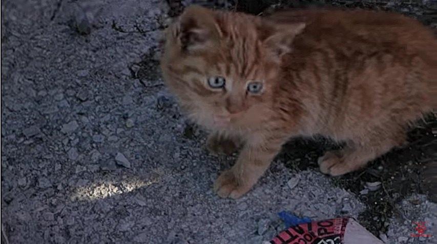 ゴミ捨て場にいる子猫の発見時