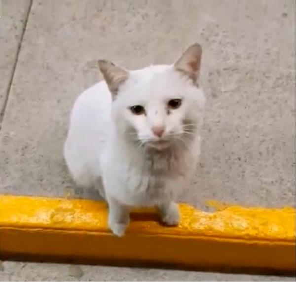 店先に座る白猫