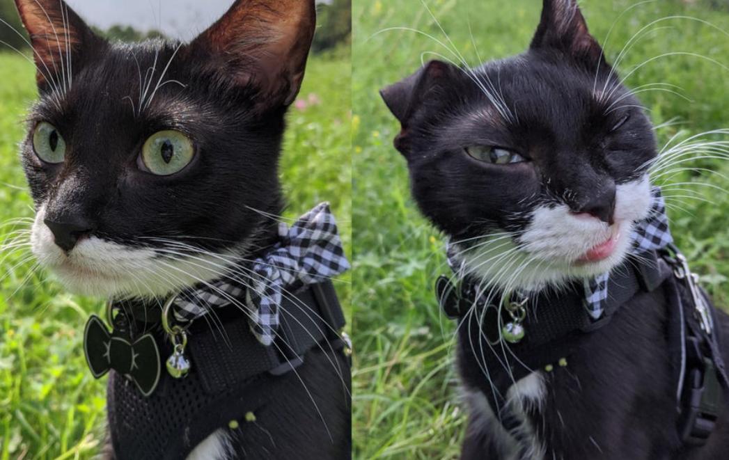 くしゃみして顔が変わった猫