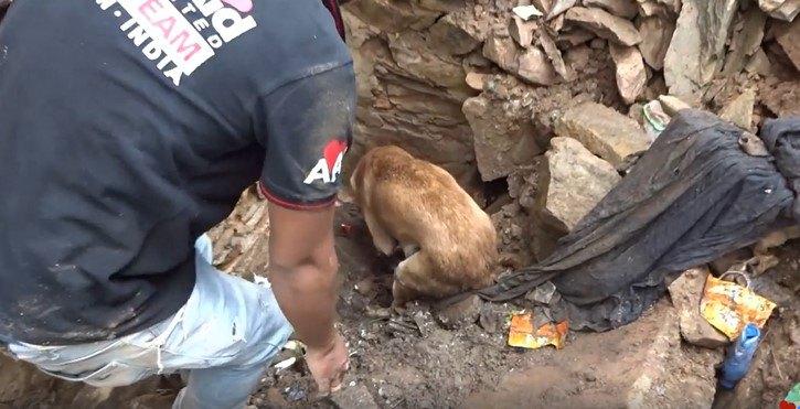 穴を掘りだす母犬