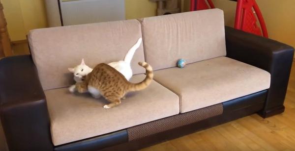嫌がる先輩猫