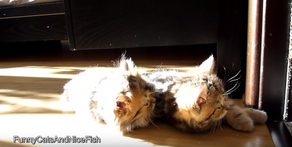 母猫が退場して驚く子猫たち