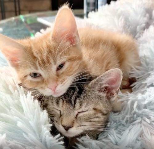 お昼寝している二匹の子猫
