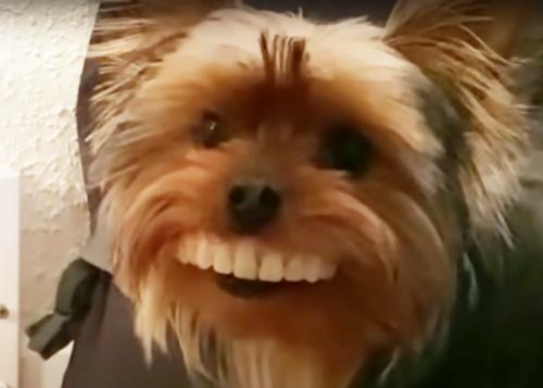 入れ歯を咥えた犬
