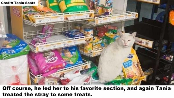 キャットフード売り場の白猫