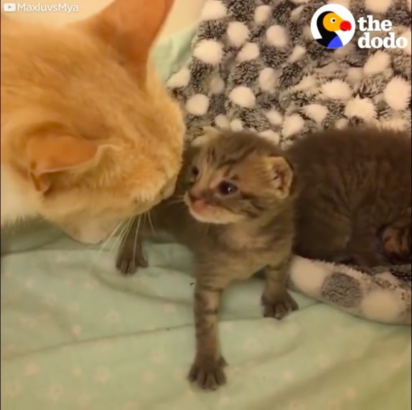 子猫の匂いを嗅ぐ母猫