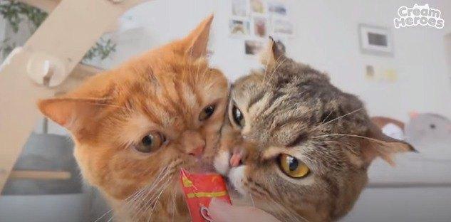 おやつをもらう猫たち