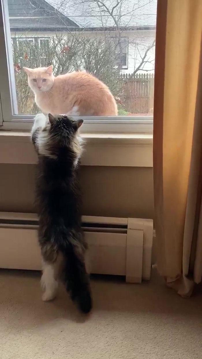 天気予報猫の普段のすがた