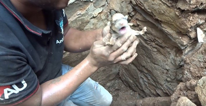 1匹目の子犬を救助