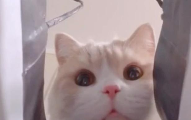 がっかりした猫の顔