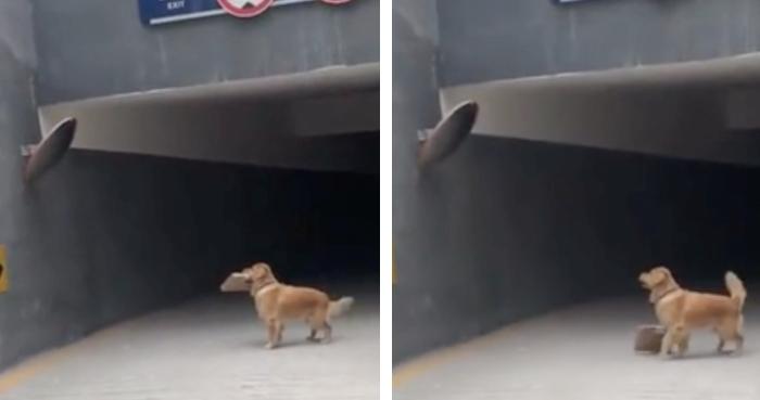 荷物を落とす犬