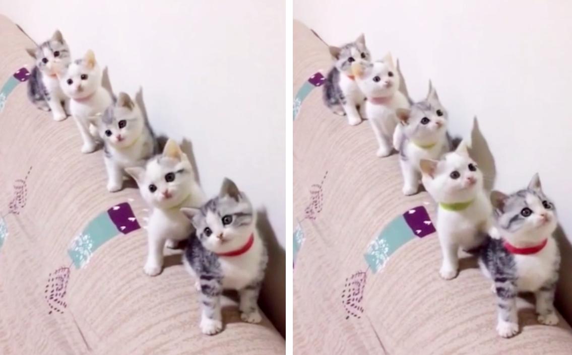 整列する子猫