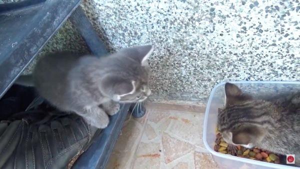 別の子猫の乱入を阻止