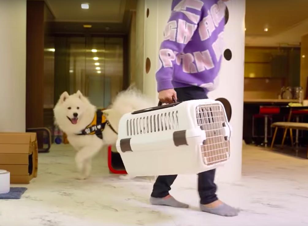 出かける準備をする犬と猫