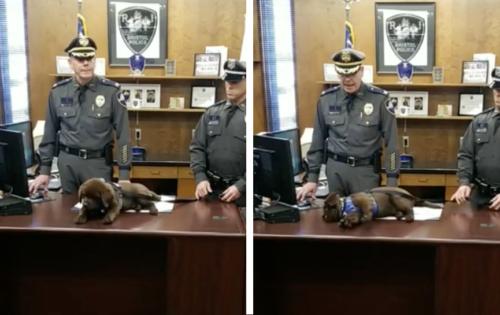 任命式で寝てしまう子犬の警察犬