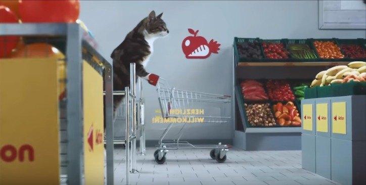 カートを押す猫