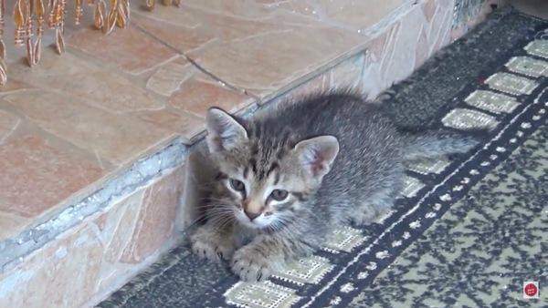 恨めしそうに見る別の子猫