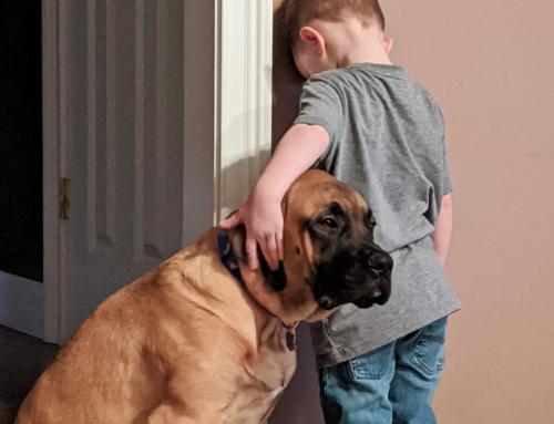 男の子のお仕置きに付き合う犬