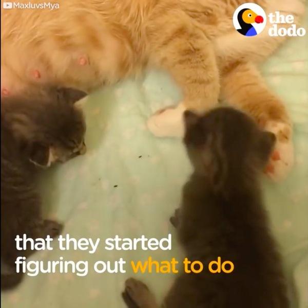 授乳に挑む母猫