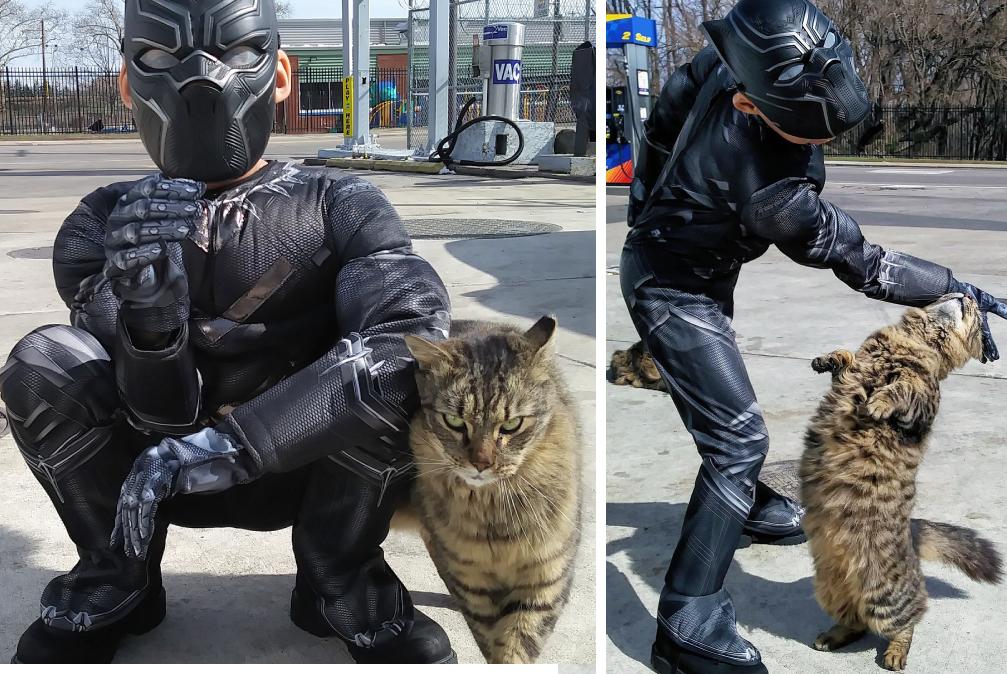 猫を救う男の子
