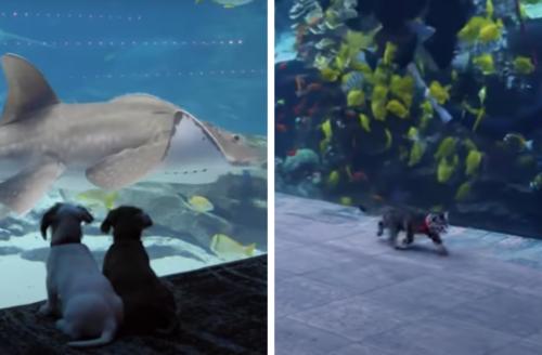 水族館に来た犬と猫