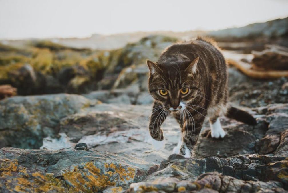 プロが撮影した猫
