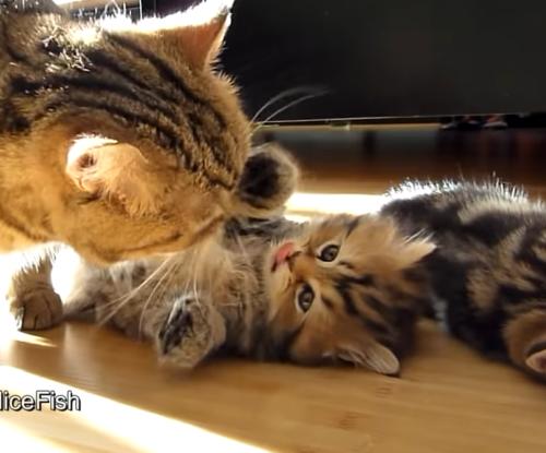 母猫と子猫の日向ぼっこ