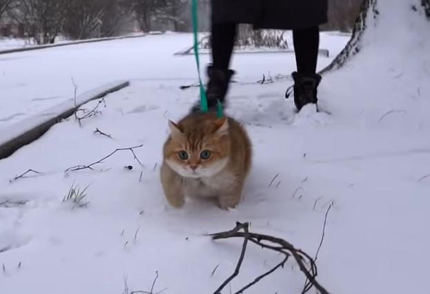 足早に歩く猫のホシコ