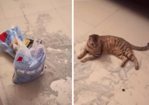 猫砂をぶちまけた猫