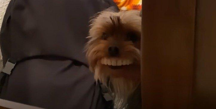 歯を付けた犬