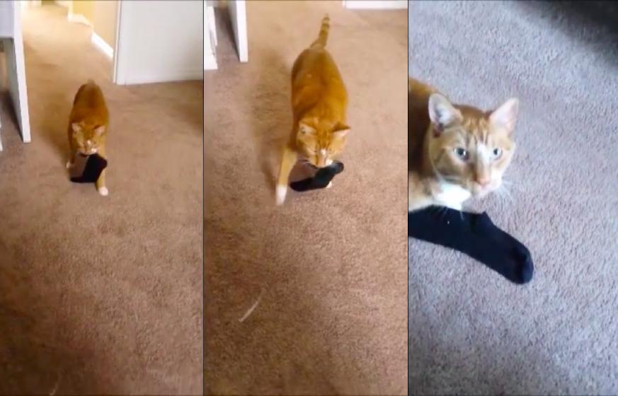ガニ股で靴下を持ってくる猫