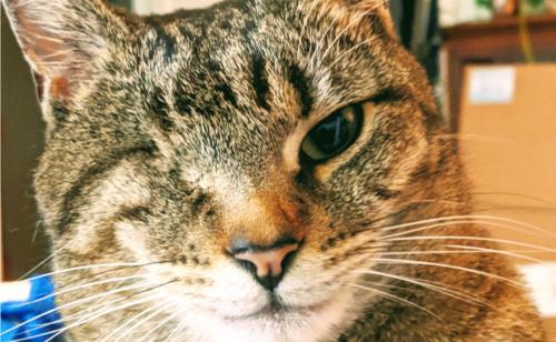 目が一つの猫