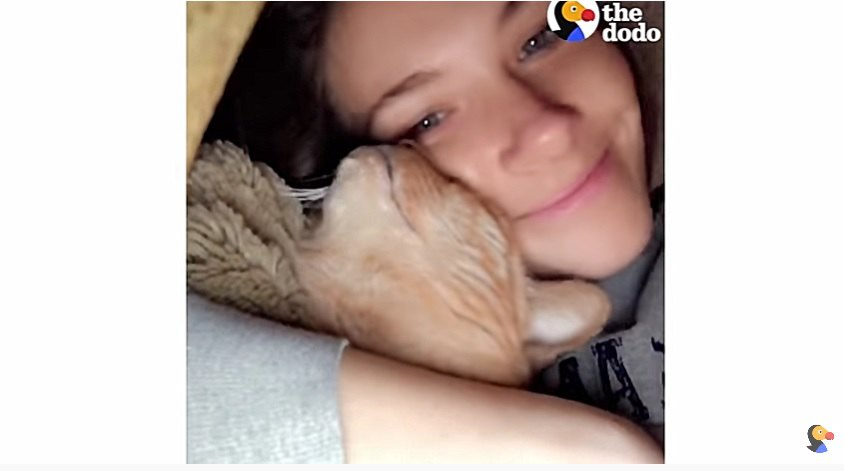 猫に頬ずりする女性