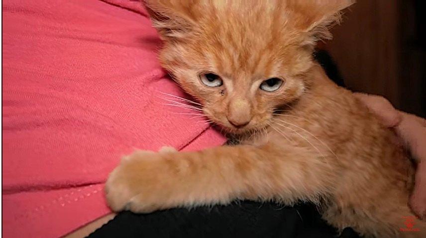ゴロゴロ喉を鳴らす子猫