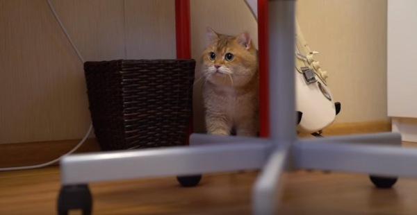 怖くて椅子の下に隠れるホシコ