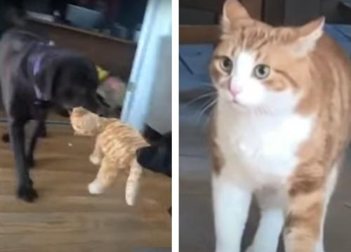 猫のぬいぐるみで遊ぶ犬に引きつる猫