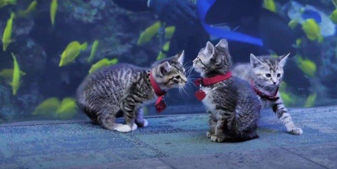 水族館の猫