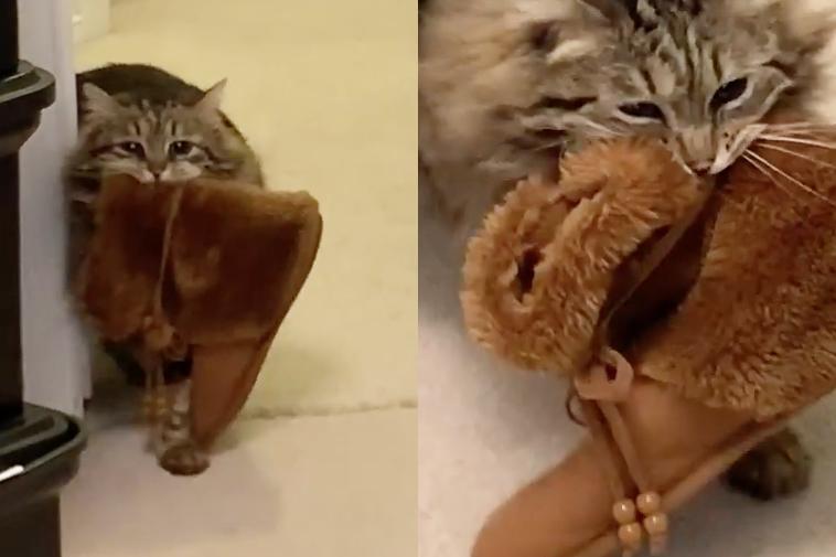 スリッパを運ぶ猫