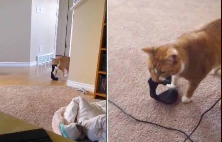 違うお部屋から靴下を持ってくる猫