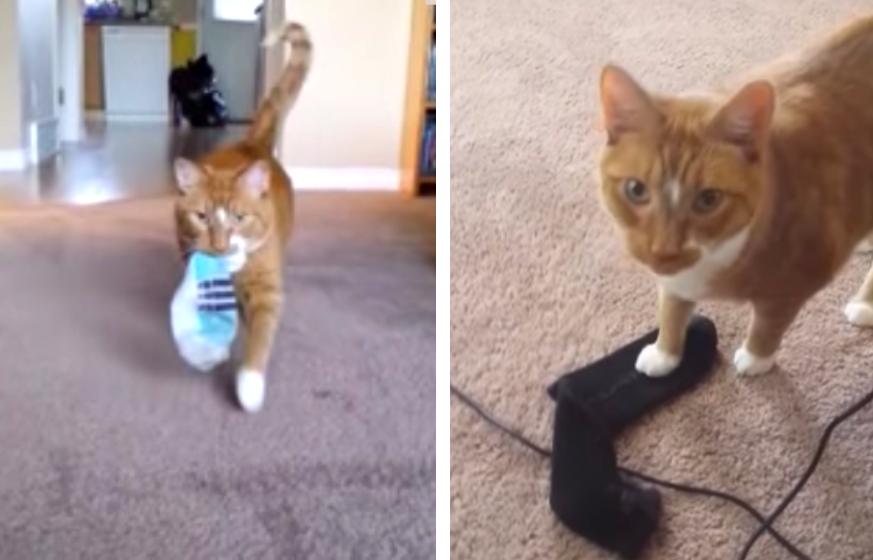 靴下を持ってくる猫