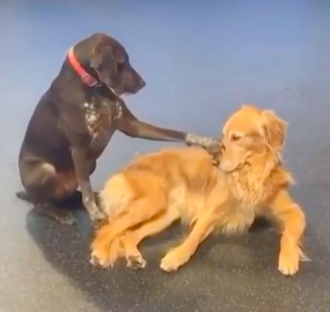 犬を励ます犬