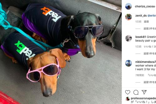 FedExの犬