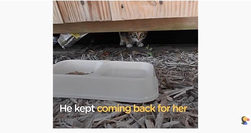 餌と水を子猫にあげる男性