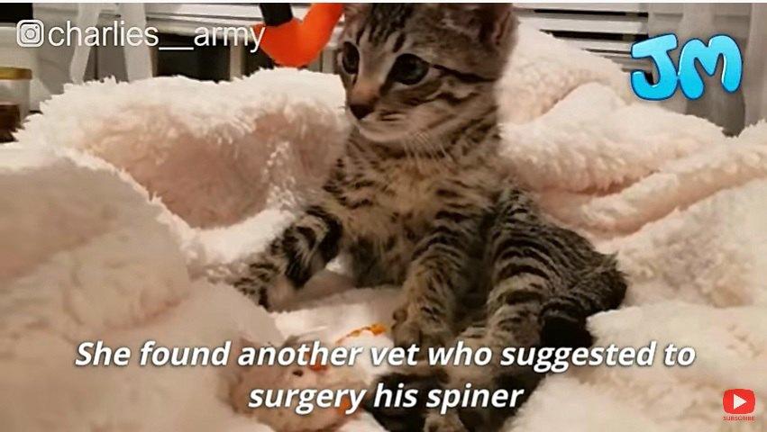 手術を受けた子猫