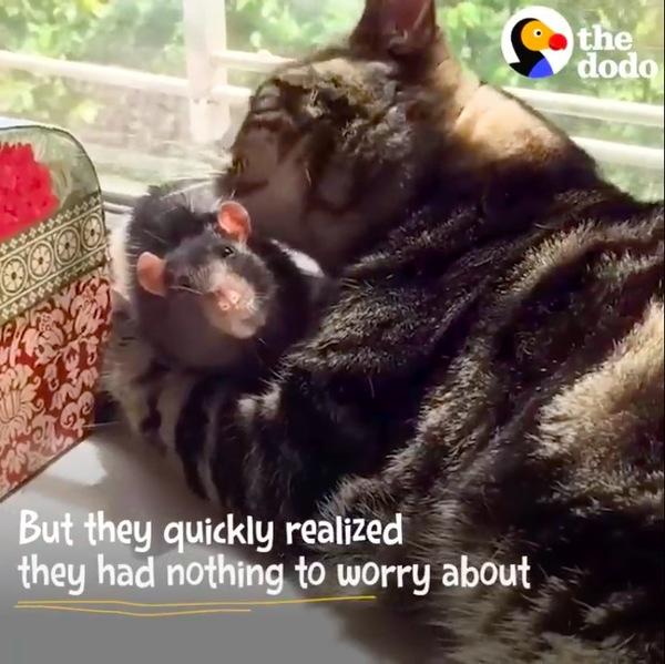 ねずみを毛繕いする猫