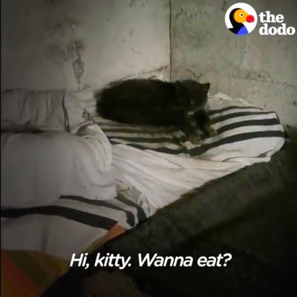 地下室の猫のベッド
