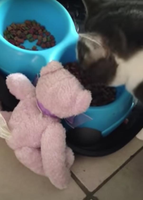 テディーベアと食事をする猫