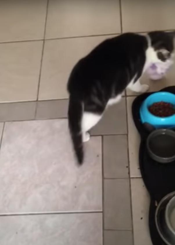 食事の場所まで歩く猫
