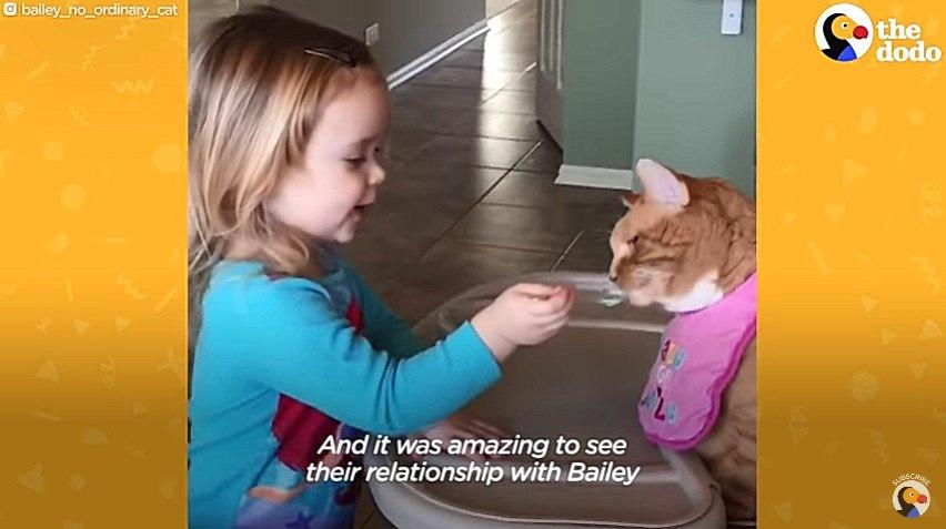 子供と一緒に遊ぶ猫