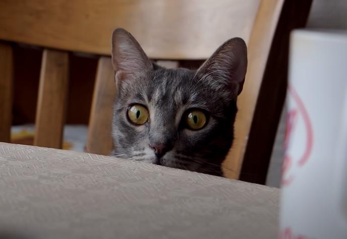 子猫をガン見する先住猫